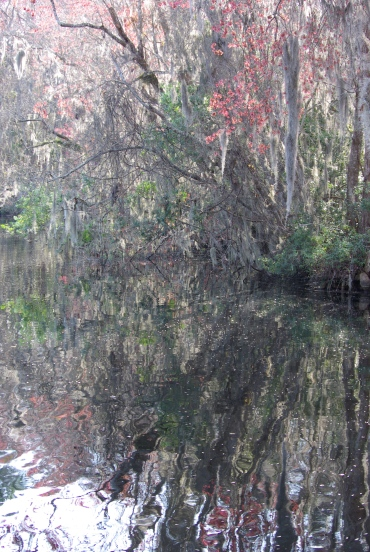 trees reflected
