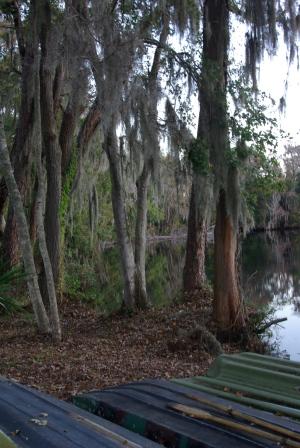 boats & trees
