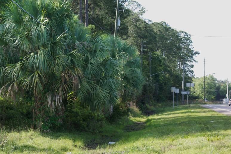 4-9-15 Palms